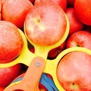 Оптовая продажа овощей и фруктов