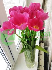 Тюльпаны оптом от 25 р. с доставкой в Иркутск